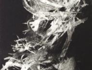 kerstin_franke-gneuss-aphrodite-2013-aussprenge_aquatintaradierung-33-9x17-8